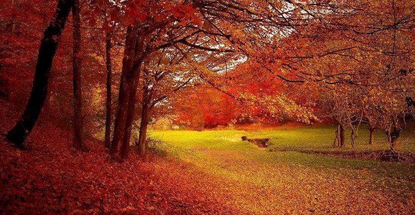 Réflexologie en automne