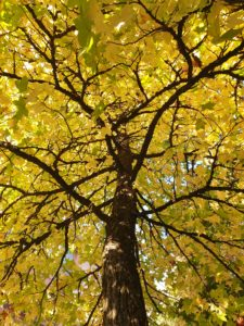 Un bon réflexe : la Réflexologie pour mieux vivre l'automne